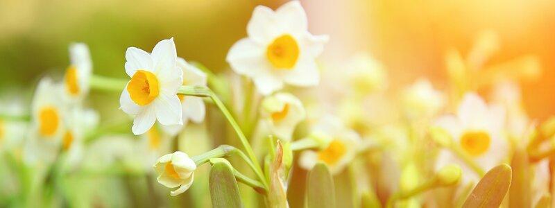 Vier de lente